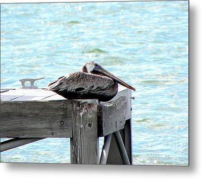 Pelican Resting Metal Print by Terri Mills