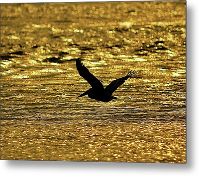 Pelican Silhouette - Golden Gulf Metal Print by Al Powell Photography USA