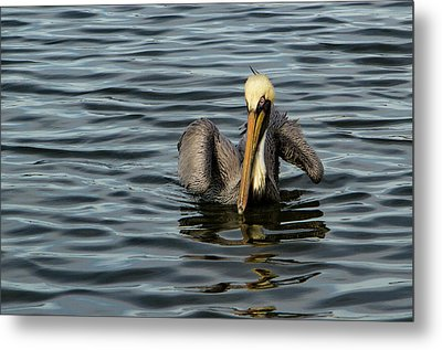 Metal Print featuring the photograph Pelican Wing In A  Twist by Jean Noren