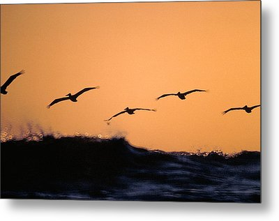 Pelicans Over The Pacific Metal Print by Michael Mogensen