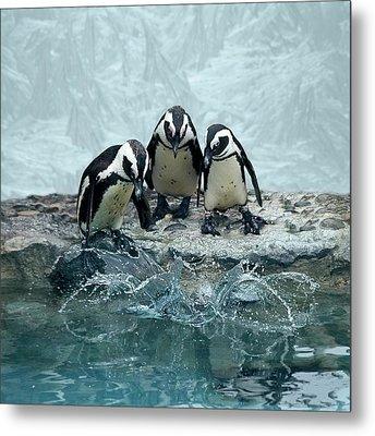 Penguins Metal Print by Fotografias de Rodolfo Velasco