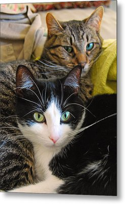 Penny And Baby Metal Print by Tony Ramos