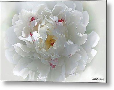 Metal Print featuring the photograph Peony by Bonnie Willis