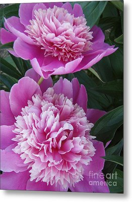 Metal Print featuring the photograph Peony by Kristine Nora