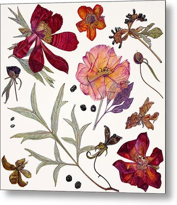 Peony Specimens Metal Print by Rachel Pedder-Smith