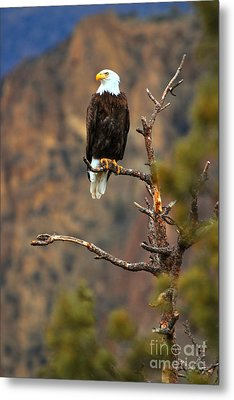 Perched At Smith Rock Metal Print by Adam Jewell