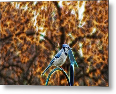 Perched Jay Metal Print by Cameron Wood