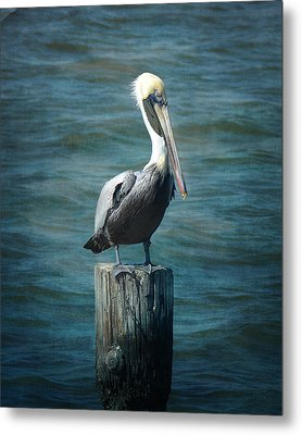 Perched Pelican Metal Print by Carla Parris