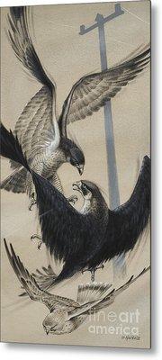 Peregrine Falcon And Kestrel Metal Print