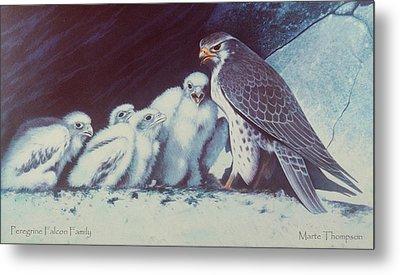 Peregrine Falcon Family Metal Print by Marte Thompson