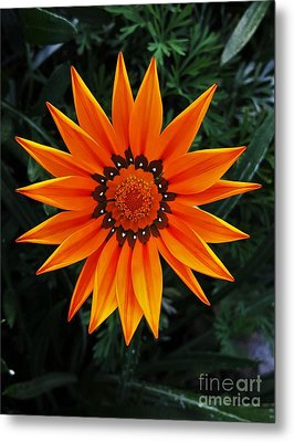 Perfect Flower  Metal Print by Jasna Gopic