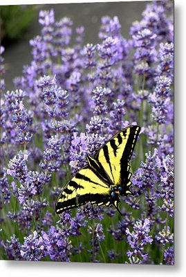 Perfect Imperfection Metal Print by Marie Neder