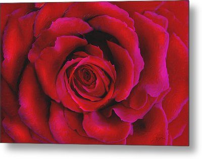 Perfect Rose Metal Print by Joel Payne