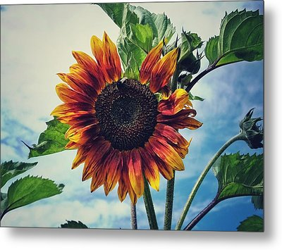 Perfectly Imperfect Metal Print by Karen Stahlros