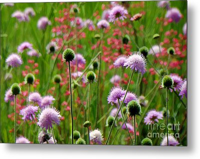 Perky Chives Metal Print by Betsy Zimmerli
