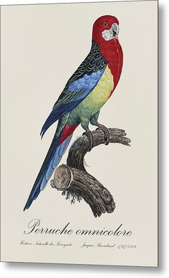 Perruche Omnicolore / Eastern Rosella - Restored 19th Century Illustration By Jacques Barraband Metal Print by Jose Elias - Sofia Pereira