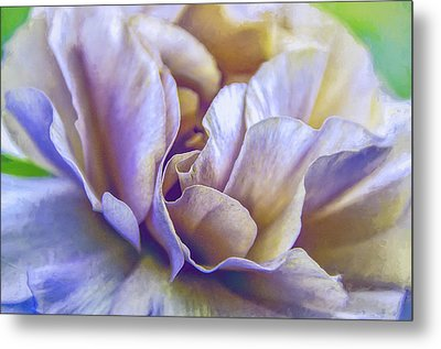 Persian Blooming Buttercup Metal Print by Julie Palencia