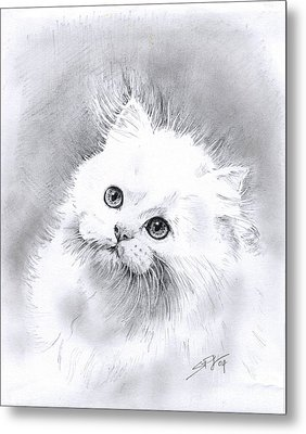 Persian Cat Metal Print by Sandra Phryce-Jones