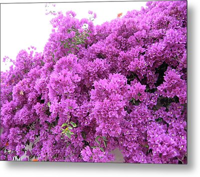 Metal Print featuring the photograph Peruvian Blooms by Rebecca Wood
