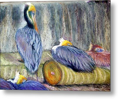 Metal Print featuring the pastel Peruvian Pelicans Three Pastel by Antonia Citrino