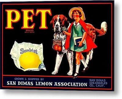 Pet Saint Bernard 1920s California Sunkist Lemons Metal Print by Peter Gumaer Ogden