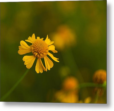 Petals Of Nature Metal Print by Christopher L Thomley