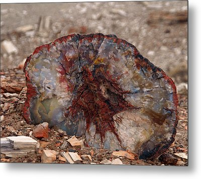Metal Print featuring the photograph Peterified Jewel by Melissa Peterson