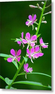 Petites Fleurs Violettes Metal Print