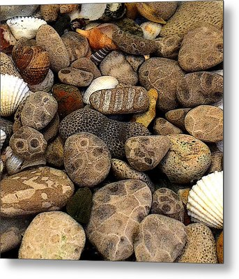 Petoskey Stones With Shells L Metal Print by Michelle Calkins
