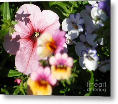 Petunia And Nemesia At Sunset Metal Print by Sonya Chalmers