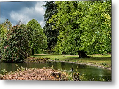 Petworth Lake With Dog Metal Print by Michael Hope
