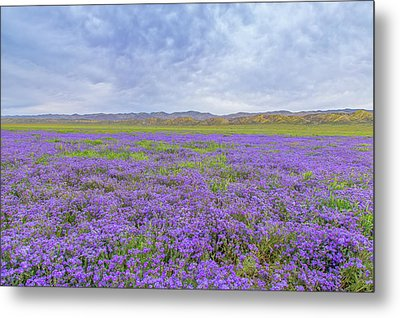 Metal Print featuring the photograph Phacelia Field by Marc Crumpler