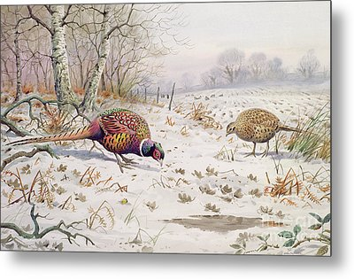 Pheasant And Partridge Eating  Metal Print