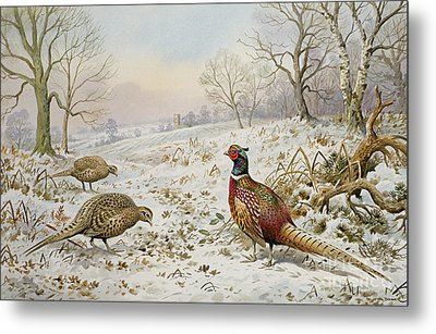 Pheasant And Partridges In A Snowy Landscape Metal Print by Carl Donner