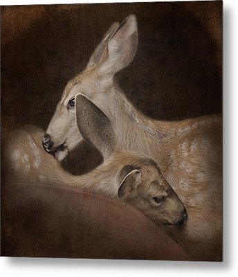 Phileo Metal Print by Sally Banfill