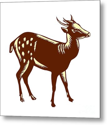 Philippine Spotted Deer Woodcut Metal Print by Aloysius Patrimonio