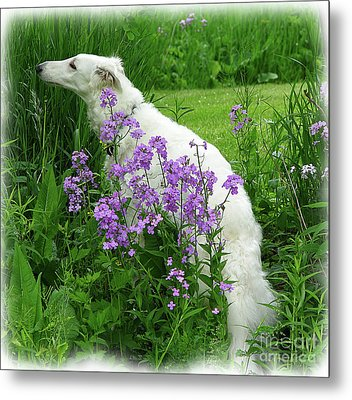 Phlox And Hound Metal Print by Deborah Johnson