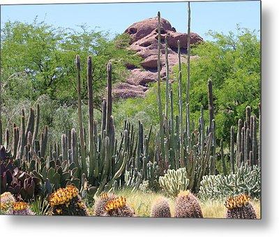 Phoenix Botanical Garden Metal Print