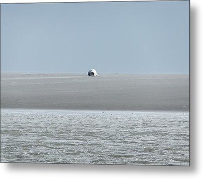 Metal Print featuring the photograph Phoque Blanc Roulant Au Banc by Marc Philippe Joly