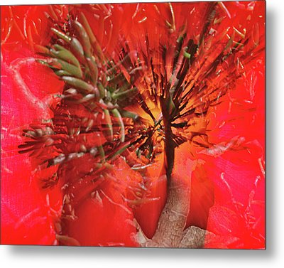 Metal Print featuring the photograph Photo Sin Thesis by Susan Capuano