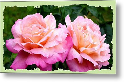 Metal Print featuring the photograph Photogenic Peace Roses by Will Borden