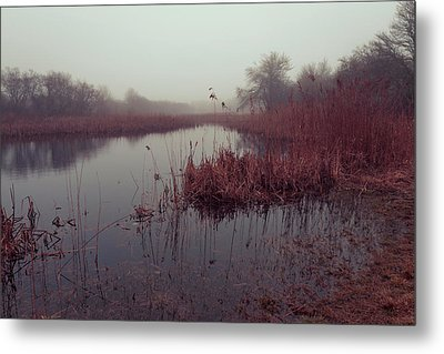 Metal Print featuring the photograph Phragmites And Fog by Andrew Pacheco