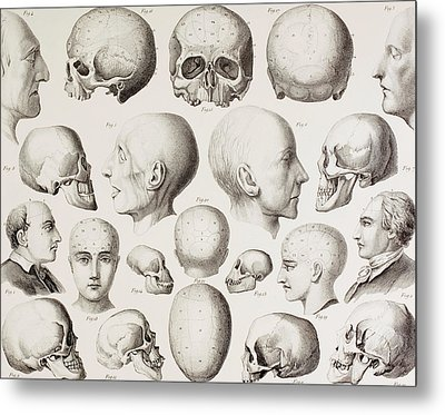 Phrenological Illustration Metal Print by English School