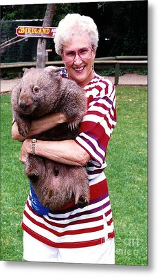 Phyllis Holding Thirty Lb Wombat Australia Metal Print
