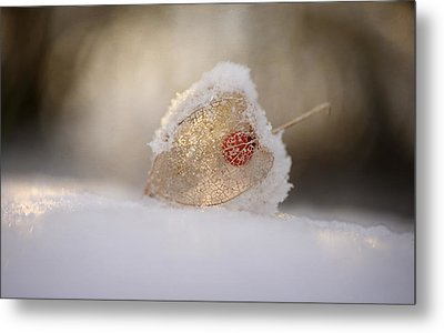 Physalis In Snow Metal Print by Lotte Gr?nkj?r