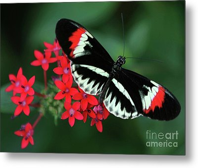 Piano Key Butterfly Metal Print by Sabrina L Ryan