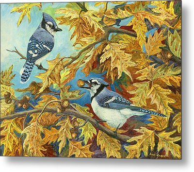 Picking Acorns - Blue Jay Metal Print by Susan Zabel