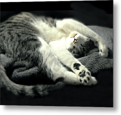 Pilates Cat Metal Print