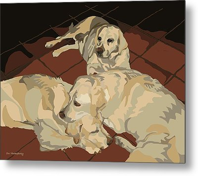Pile Of Three Pups Metal Print by Su Humphrey