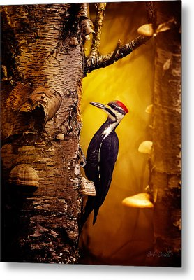 Pileated Woodpecker Forest Sunrise Metal Print by Bob Orsillo